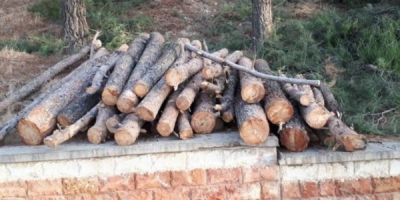 تکلیف درختان قطع شده تپه شاهد ایلام چه میشود؟