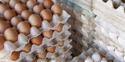 عرضه تخم مرغ در شرایط نا سالم در قروه
