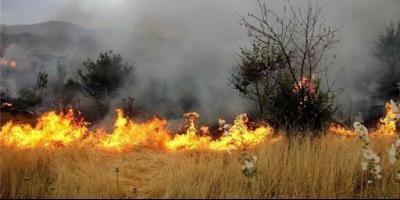 لزوم حمایت از کشاورزان خسارتدیده ناشی از آتشسوزی باغدشت کازرون