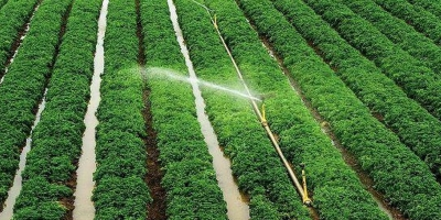 لزوم کاشت محصولات استراتژیک در خوزستان