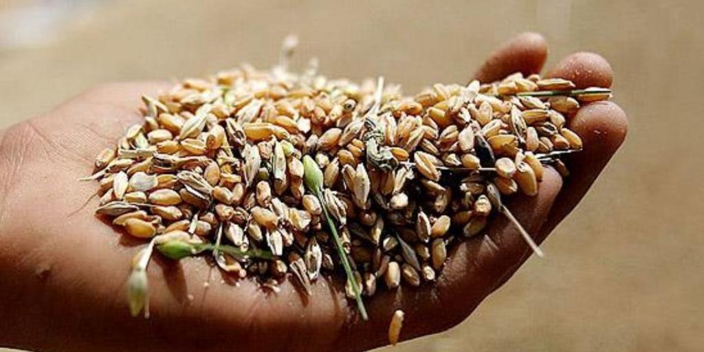کمبود بذر گندم در شمال استان فارس به چه دلیل است؟>         </div>         <div class=