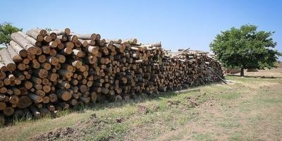 پیگیر قطع درختان در تویسرکان باشید