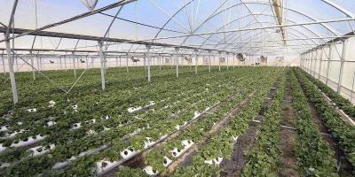 پافشاری جهاد کشاورزی برای تعطیلی 2 هکتار گلخانه در فارس