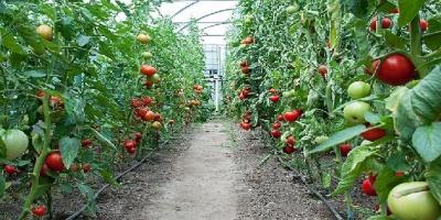 تعطیلی مجمتع گلخانهای در فارس، کارگرانش را بیکار کرد