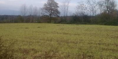 بررسی فوری زمینهای اهالی چوبیندر قزوین