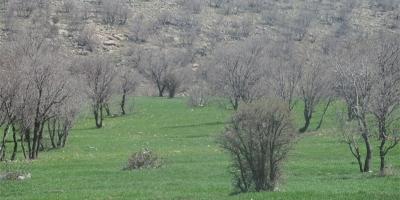 محافظت از جنگلهای بلوط کوهدشت لرستان الزامی است