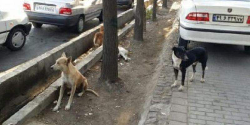 سگ های ولگرد خطرناک در عظیمیه کرج>         </div>         <div class=