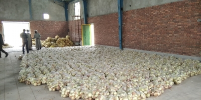 توزیع ۲۰ تن پیاز توسط بسیجیان در شهداد