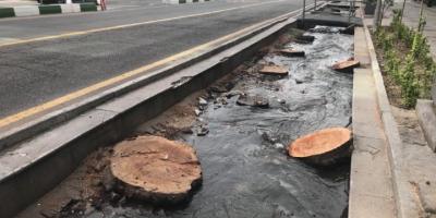 قطع نمودن درختان سرو ۱۰۰ساله در شیراز