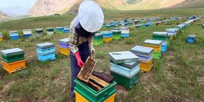 متولیان امر حمایت لازم از زنبورداران لرستان ندارند