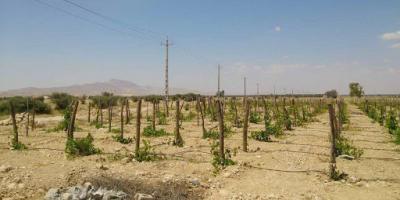 درخواست رسیدگی به عدم تخصیص برق به باغهای قزوین