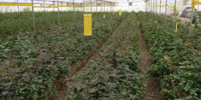 احداث گلخانه در آموزشکده کشاورزی ساری توسط اساتید و دانشجویان