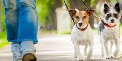 تقاضای برخورد با سگگردانی در شهرکرد