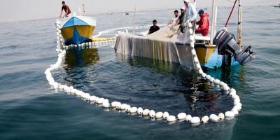 جلوگیری از صید کوسههای سرچکشی در سواحل بوشهر
