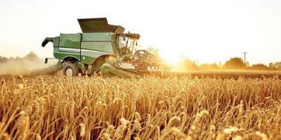 كرمانشاه رتبه چهارم توليد گندم كشور را کسب کرد