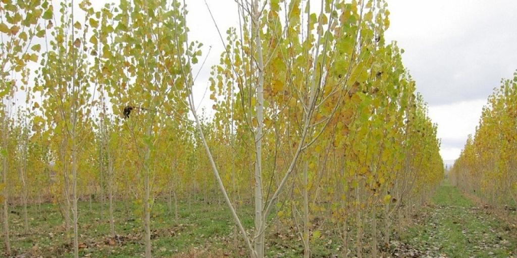 کاشت درختان غیرمثمر در کل کشور ممنوع شود >         </div>         <div class=