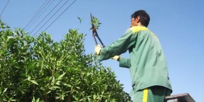 حقوق کارگران فضای سبز شهرداری خرم آباد چرا پرداخت نمی شود؟