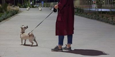 گلایه مردم رشت از جولان سگهای ولگرد در پارک بانوان