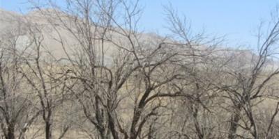 لزوم احیای روستاهای خالی از سکنه در استان مرکزی