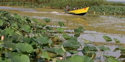 عدم توجه سازمان محیط زیست به تالاب انزلی