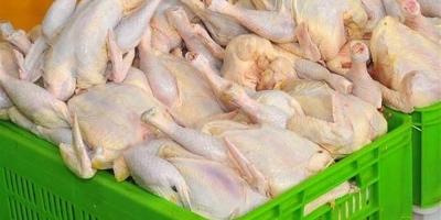 دلیل افزایش نجومی قیمت مرغ چیست؟
