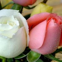 چراغ های مه شکن سه راهه شیخ رجب به بخشایش را نصب کنید
