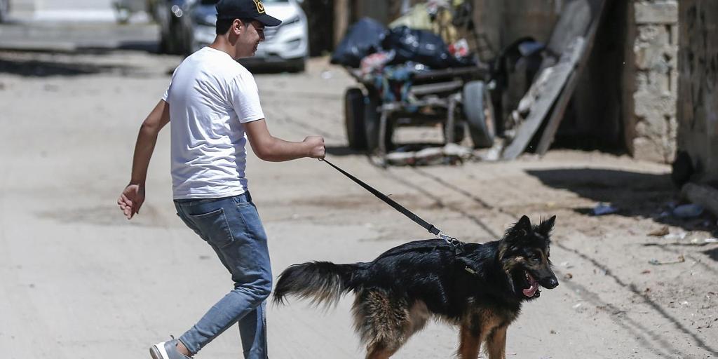 جلوی گرداندن سگهای خانگی در پارکها را بگیرید>         </div>         <div class=