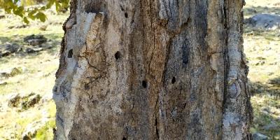 چرا مسئولان به فکر جنگل های بلوط ایلام نیستند؟
